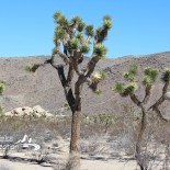 Take a Trip: Joshua Tree National Park